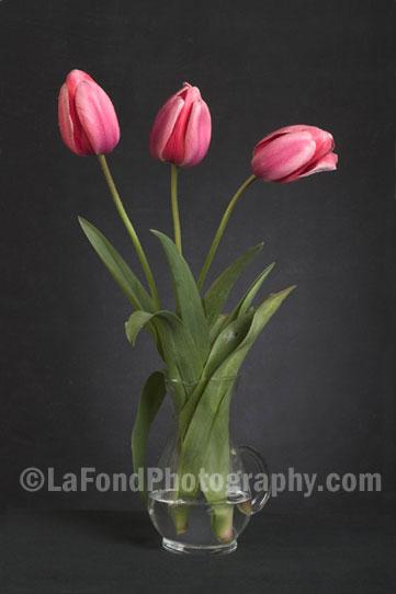 Flower Photos Richard La Fond Photography Newport
