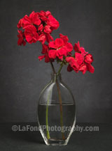 Red Geraniums Clear Vase
