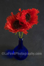 Twin Oriental Poppies